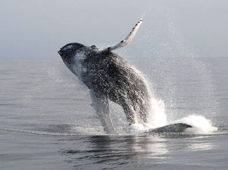 Whale Watch Tours Costa Rica