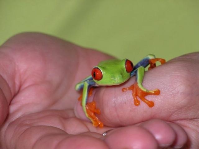 Frog Costa Rica Wildlife