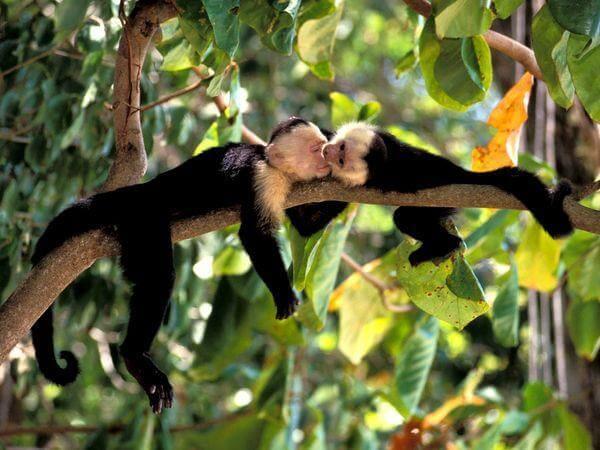 Wildlife monkeys